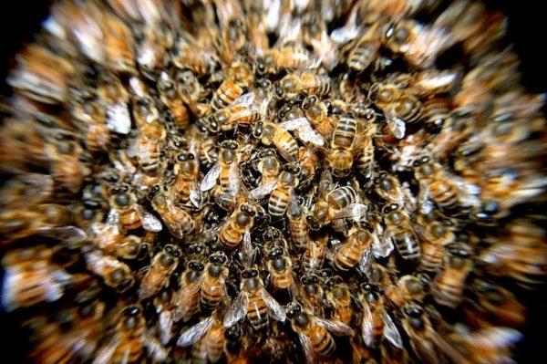Február 28-ig lehet jelentkezni az idei méhegészségügyi támogatásra (Fotó: Pixabay, PatoSan)