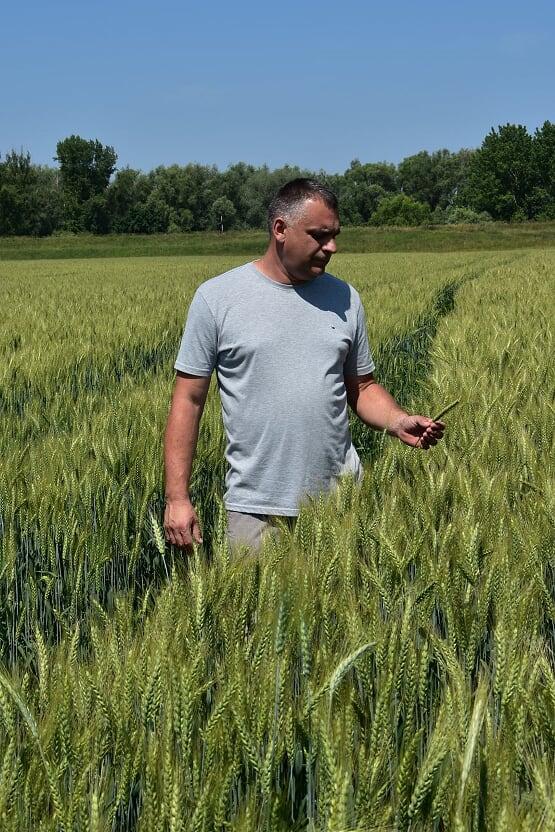 Az Energia Humin levéltrágya alapos segítséget nyújt a gazdáinknak (Fotó: Phylazonit)