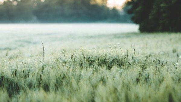 Az agrár-környezetgazdálkodás során többféle vegyszer használata is tilos, ha a termelők meg akarnak felelni a támogatás feltételeinek - képünk illusztráció