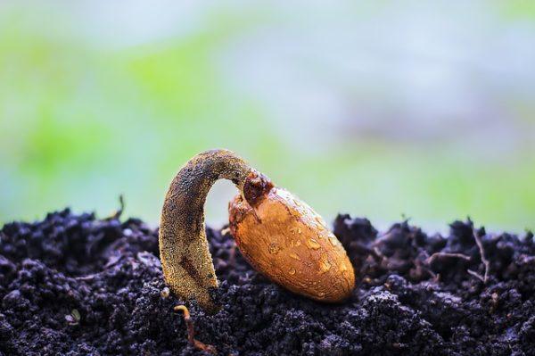 Fontos, hogy megfelelő környezetet biztosítsunk növényünknek. (Fotó: Pixabay, Truthseeker08)