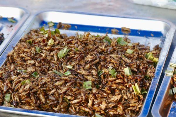 A rovarokat a keleti országokban már évszázadok óta fogyasztják. (Fotó: Pixabay, Satyaprem)