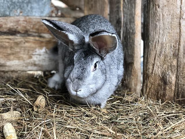 A nyúl származási igazolásának kiállítására vonatkozó követelmények is szerepelnek az állattenyésztési törvény módosult mellékletében