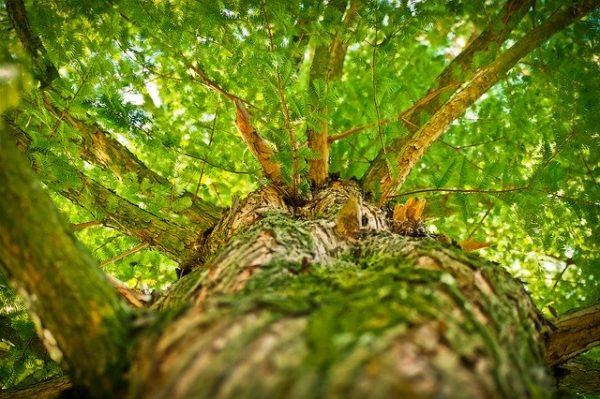 Újabb 7 milliárd támogatás az erdők létesítésére