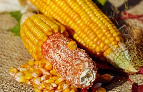 A változó tőszámú vetésnél a várható maximális termés a lehető legkisebb költségfelhasználással érhető el (Fotó: Pixabay, Couleur)