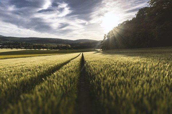 A mezőgazdasági termelők segítése érdekében a lehető leghamarabb megkezdik a támogatások folyósítását. (Fotó: Pixabay, Free-Photos)