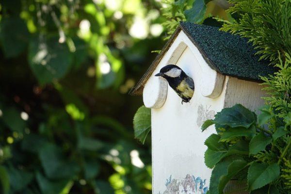 Kedves madarak a széncinegék, de a fészkelésben nem ismernek kegyelmet: az egyik kedvenc célpontjaik a postaládák - képünk illusztráció
