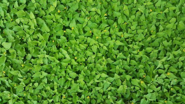 A takarónövények jó hatással vannak a talajra. (Fotó: Pixabay, Brett_Hondow)