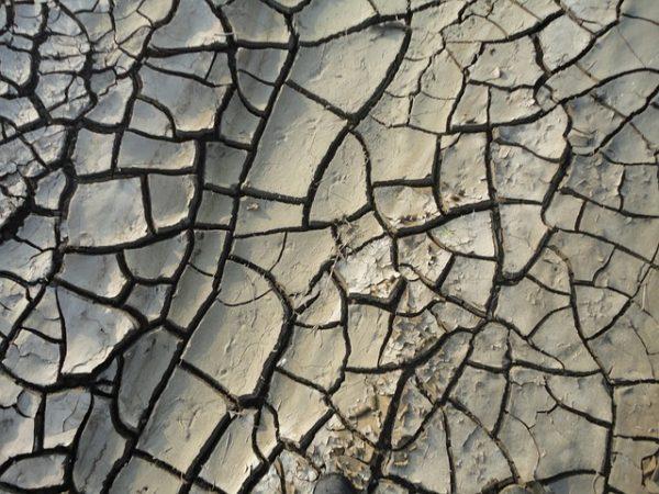 A növények számára fontos a talaj megfelelő nedvességtartalma. (Fotó: Pixabay, Jcesar2015)