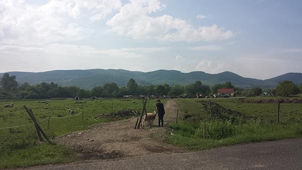 14 milliárd forint kárenyhítő juttatás érkezett a magyar gazdáknak, a legnagyobb arányban aszálykár miatt igényelték - képünk illusztráció