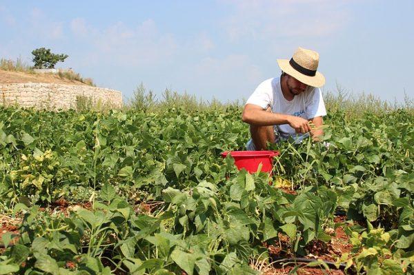 A munkaerőhiány nagy problémát jelent a zöldség- és gyümölcságazatban. (Fotó: Pixabay, Monikabaelchler)