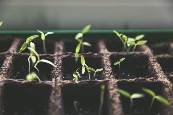 A lapos tetők is megoldásként szolgálhatnak termesztés szempontjából. (Fotó: Pixabay, Markusspiske)