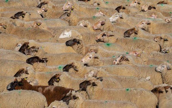 A koronavírus miatt változik a mezőgazdasági összeírás menete - képünk illusztráció