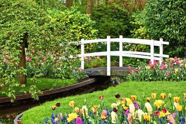A tulipántermesztők is komoly gazdasági nehézségekkel küzdenek a koronavírus járvány hatásai miatt - képünk illusztráció