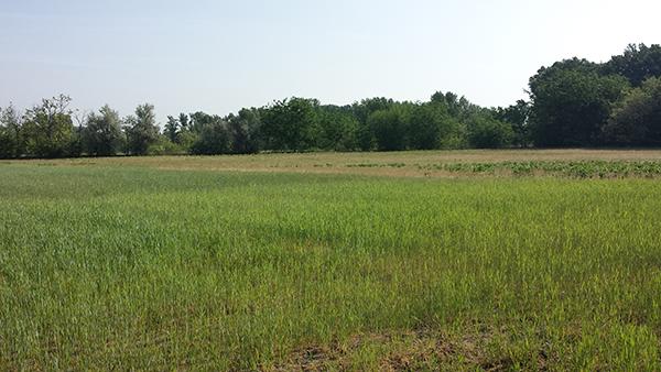 Állami földek értékesítésével folytatódik az osztatlan közös földtulajdon felszámolása - képünk illusztráció