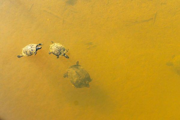 Fontos, hogy a víz ne legyen szennyezett vagy túl zavaros, ugyanis az árthat a növényvédő szer hatékonyságának. (Fotó: Pixabay, Wileydoc)