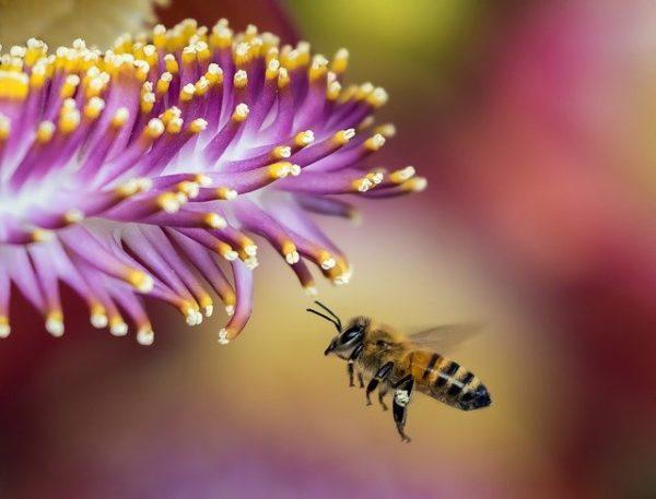 A betegség következtében veszélybe kerültek  méhészetek.(Fotó: Pixabay, Pexels)