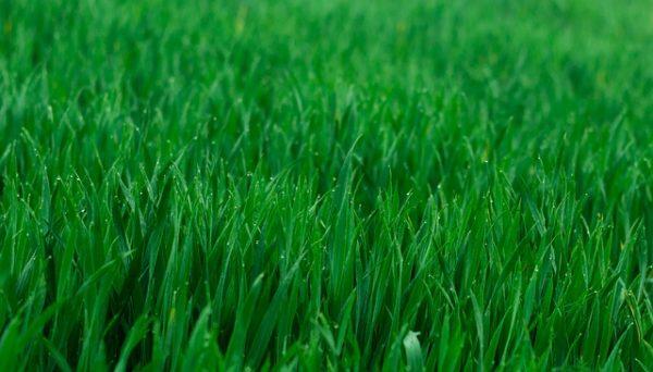 A vetőmagok rácsszerű mintázatban történő vetése elősegíti a fenntartható mezőgazdaság fejlődését. (Fotó: Pixabay, DarkWorkX)