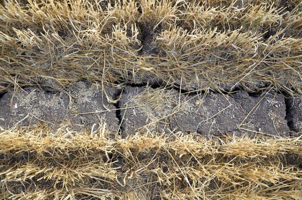 Rendkívül rossz a termesztett növények helyzete az országos aszály miatt - képünk illusztráció