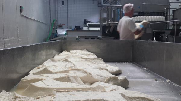 Többféle laboratóriumi módszert alkalmaznak eredménnyel a hamis tejtermékek felderítésére - a képünkön mozzarella gyártása látható Mosonmagyaróváron