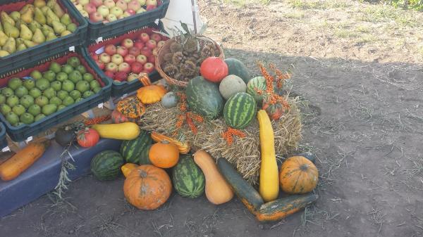 Elindult a szezon: egyre több hazai zöldség vásárolható meg a magyar üzletekben - képünk illusztráció