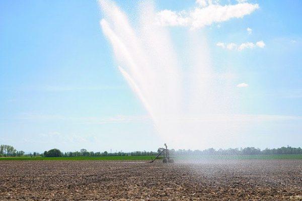 Az aszály következtében fontos a növények vízellátásának biztosítása. (Fotó: Pixabay, Anrita1705)