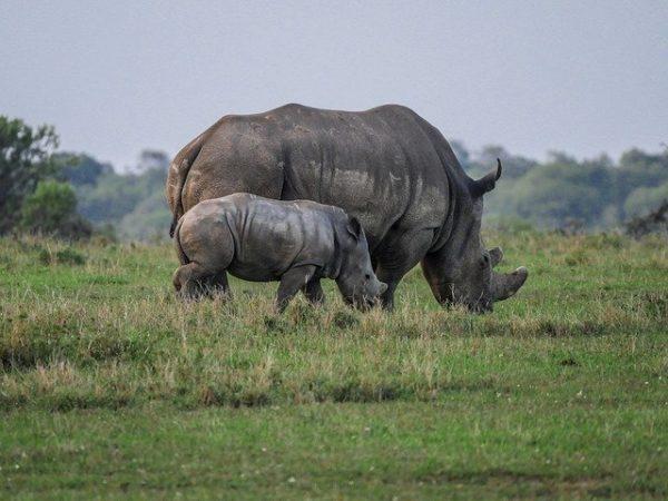 Sokkal nehezebb egyes vadon élő állatok sorsa a koronavírus miatt - képünk illusztráció