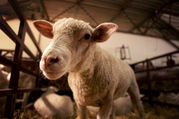 A támogatás az állattartókat és a kertészeteket kívánja segíteni. (Fotó: Pixabay, Borevina)