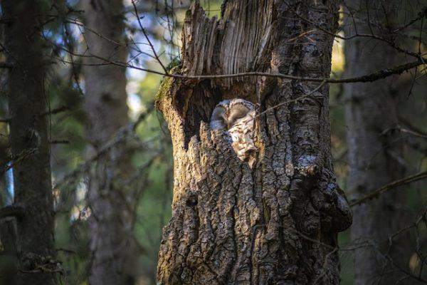 A bokros- és a fakivágás jelentős károkat okoz a madaraknak a költési időszakban