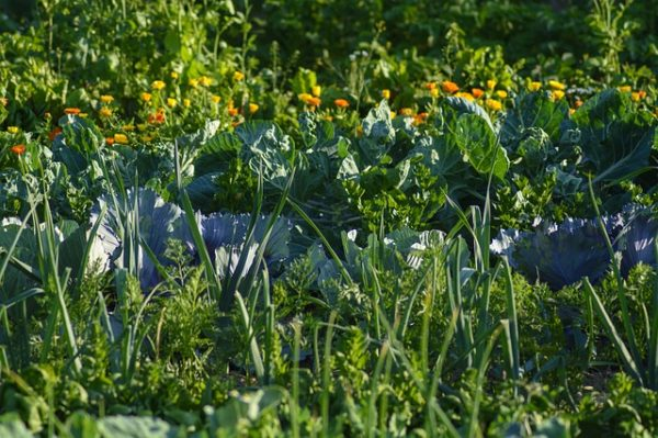 Idénymunkások hiányában a zöldségek sé s gyümölcsök betakarítása veszélybe került. (Fotó: Pixabay, Reginal)