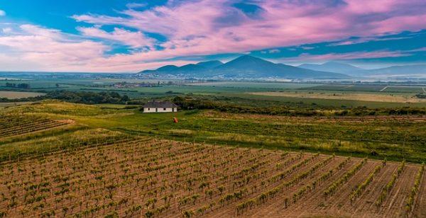 Komoly kihívás előtt áll a szőlőoltvány előállítás jövője a járványhelyzet miatt - képünk illusztráció