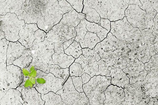 Az idei év kezdete nem alakult túl kedvezően a növénytermesztés számára. (Fotó: Pixabay, Andreas160578)