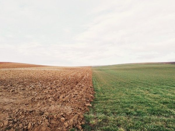 A talajjavító technikák segítenek a humusztartalom megőrzésében - képünk illusztráció