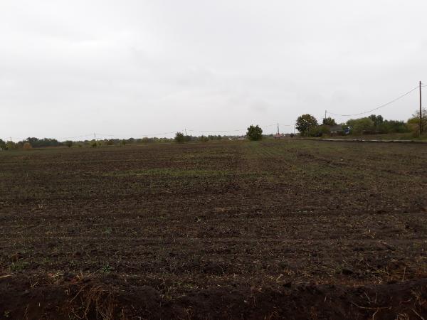Emberi betegségekre is jó lehet egy talajbaktérium? - Fotó: Magro.hu - CSZS