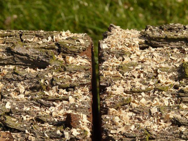 Július 1-től komoly változások jönnek a magyar erdőgazdálkodás szabályaiban