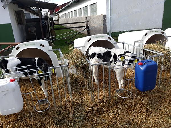 Több helyen is változott az állati szaporítóanyag témájával foglalkozó EU-s rendelkezés - Fotó: Magro.hu - CSZS