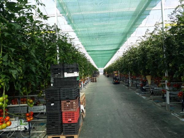 A VP 2-4.1.3-20 kertészeti üzemek korszerűsítése pályázat társadalmi egyeztetése augusztus 1. éjfélkor zárul - Fotó: Magro.hu - CSZS