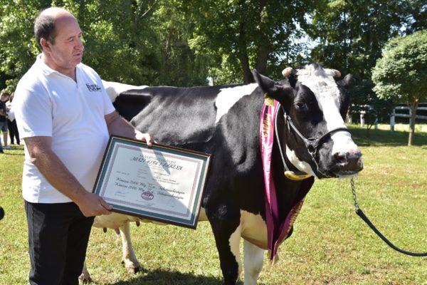 Miután 100 ezer kilogramm tejet adott, aranytörzskönyvet kapott Fáklya, a holstein-fríz tehén - fotó: Krasznai-Nehrebeczky Mária