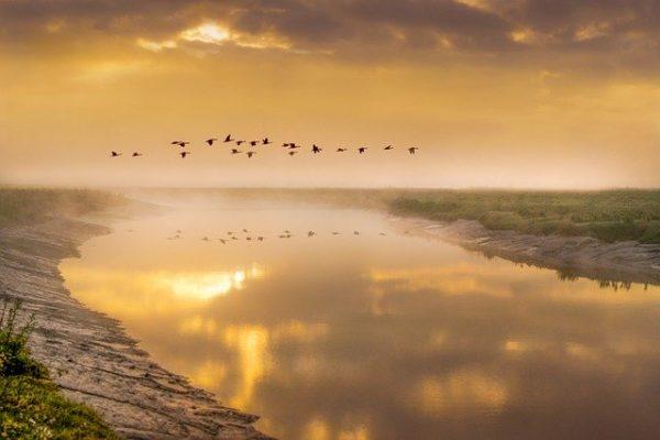 Három, a mezőgazdasághoz kötődő madár közül lehet választani a 2021 év madara szavazáson - képünk illusztráció