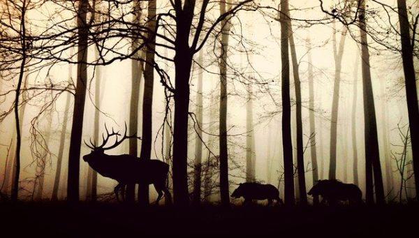 a döntés eredményeként az erdőgazdálkodás törvényben foglalt általános korlátozási lehetőségei bővülnek, de a mérték nélküli korlátozások lehetőségét a kellően körülírt szabályozás továbbra is megfelelően behatárolja - képünk illusztráció