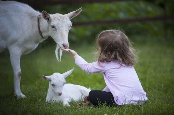 felfüggesztették az uniós juh- és kecskehús magántárolási igénylést - képünk illusztráció
