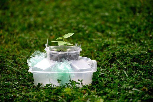A műanyagok bejutnak a növények gyökereinek szövetébe, ahol akadályozzák a vízfelvételt - képünk illusztráció