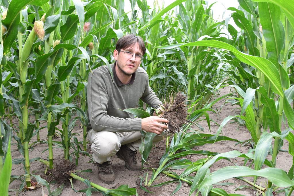 dr. Varga Sándor szakmai vezető, biológiai talajerő-gazdálkodási szakmérnök