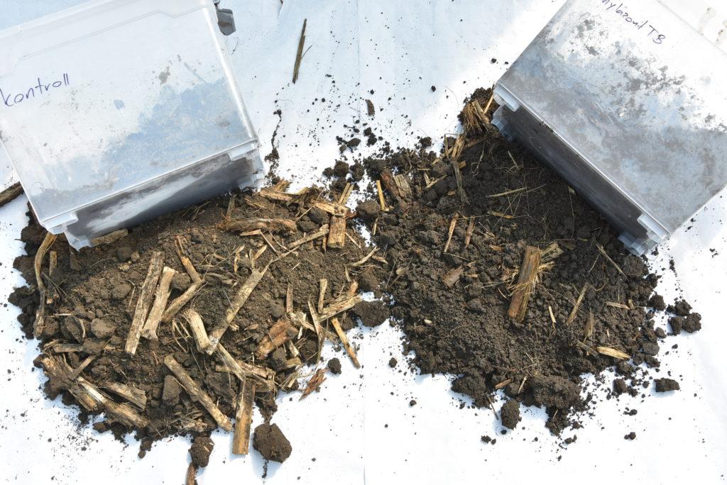 A kukoricaszár esetében azt vizsgáljuk, hogy milyen mértékű és intenzitású a bomlása a talajban az idő elteltével