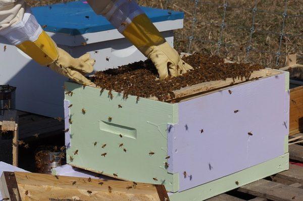 Vezetőket és tisztségviselőket választanak a magyar méhészek szeptember 5-én - képünk illusztráció