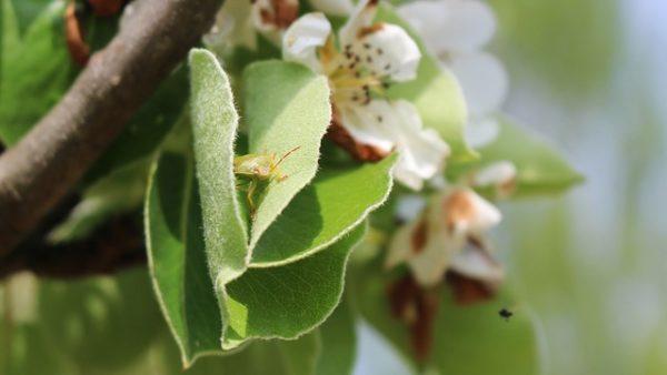 Kémiai megoldások nélkül is meg lehet védeni a növényeket a poloskák kártételétől - képünk illusztráció