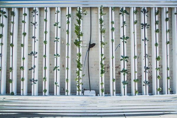 Megvalósult az automatizált vertikális növénytermesztés Kínában - képünk illusztráció