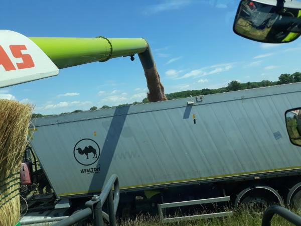 A Békés megyei aratás végén az eredmények azt mutatják, hogy az őszi árpa jól termett, a repcetermesztés viszont veszteséges volt - Fotó: Magro.hu - CSZS