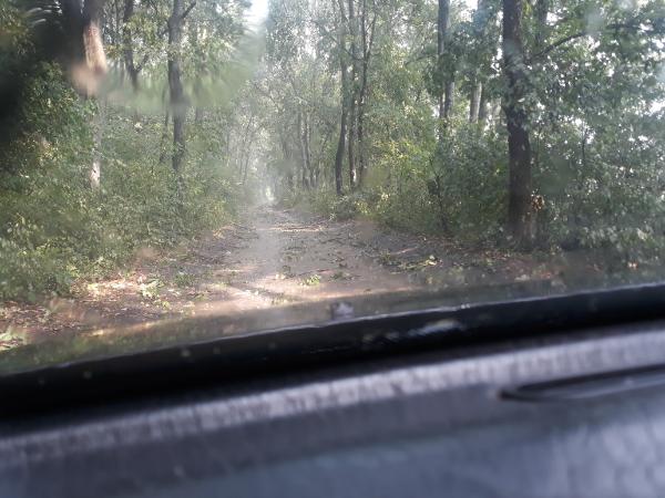 Idéntől nagyot nő a mezőgazdasági biztosítási díjtámogatás mértéke - Fotónkon viharkár az erdőben - Magro.hu - CSZS