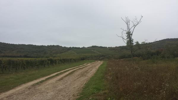 Az osztatlan közös földtulajdon rendezése után lényegesen átalakul a birtokrendszer - Fotó: Magro.hu - CSZS