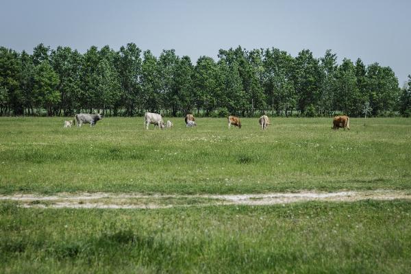 Több kutató is azt állítja, hogy nem az erdőtelepítések okozzák a Homokhátság területeinek elsivatagosodását - Fotó: Adam's Photovision, Jászszentlászló